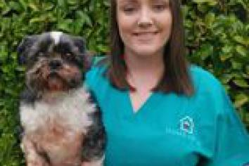 Ballymartin vet helping ease pain of putting your pet down with home euthanasia service